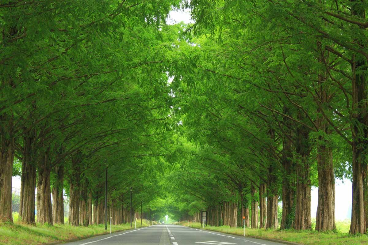 環境保全につとめ、豊かな緑が溢れる社会を。